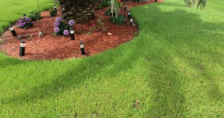 Now Offering Complete Yard Clean Ups Featured Image