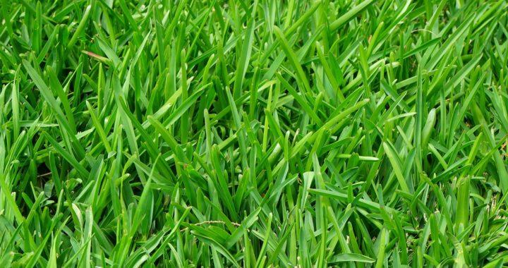 Ryegrass Installation -Schedule Yours Now